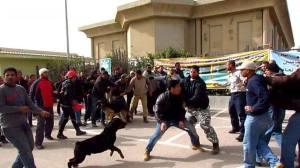 cargill_egypt_sitin_attackedwithdogs